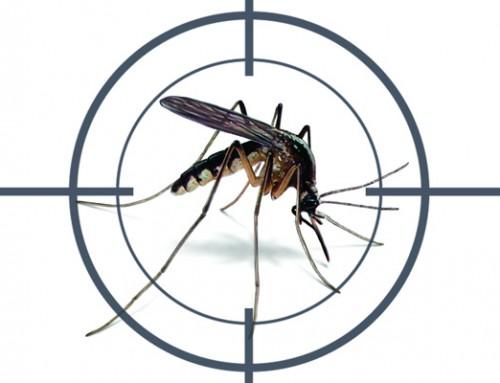 A luta continua: Alertas contra o Aedes Aegypti